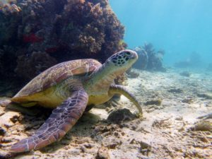 Diving into the Underwater Paradise of the Derawan Islands